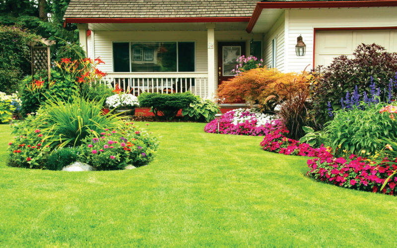 Tips For Landscape Needs