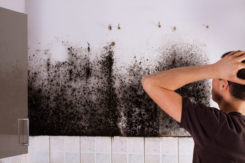 prevent mold in home