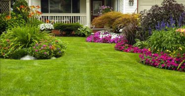 Should I Aerate My Lawn